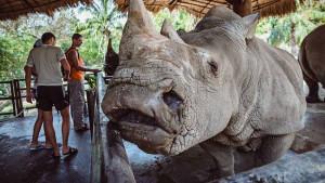 Открытый зоопарк Кхао Кхео в Паттайе (Khao Kheow Zoo)