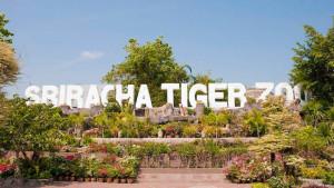 Тигриный зоопарк Сирача (Siracha Tiger Zoo)