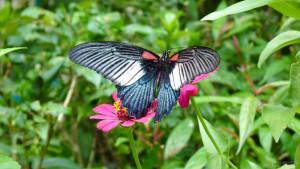 Сад бабочек Saithip Butterfly Garden в Паттайе