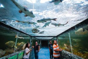 Океанариум Мир Монстров (Monsters World & Aquarium) в Паттайе