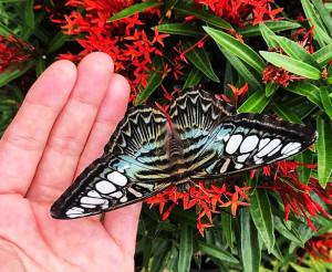 Парк бабочек Butterfly Corner в Паттайе