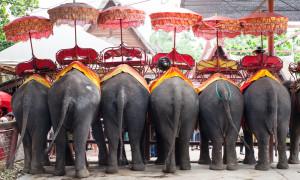 Обзор: Слоновья деревня в Паттайе