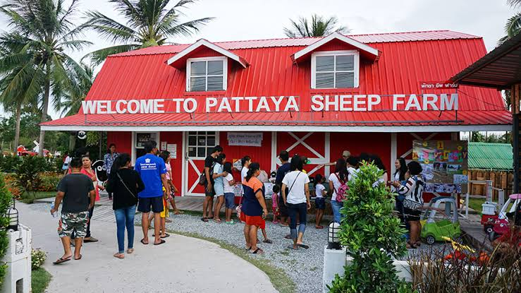 Овечья ферма Pattaya Sheep farm