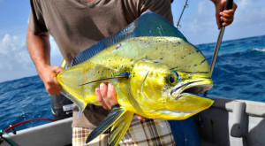 Обзор: морская рыбалка в Паттайе