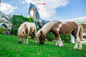Ферма карликовых пони Pipo Pony Club в Паттайе